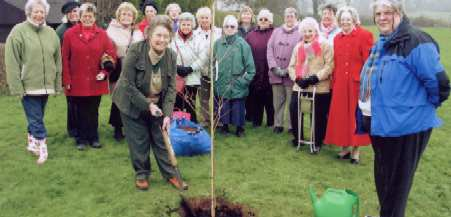 Royal British Legion Women's Section planting a tree to commemorate their 60th anniversary in 2007
